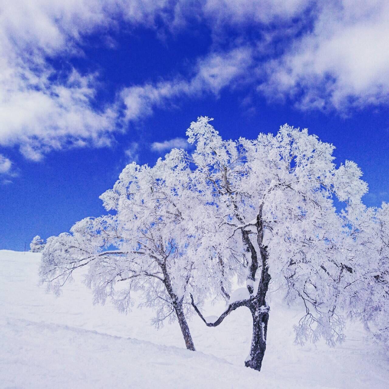 長野県で就職してみませんか?スノーボード編