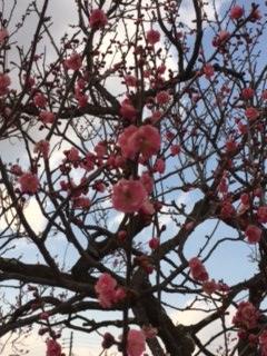 諏訪市の春!そして、珍百景~!!