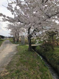 桜と地蔵とまかせて3号