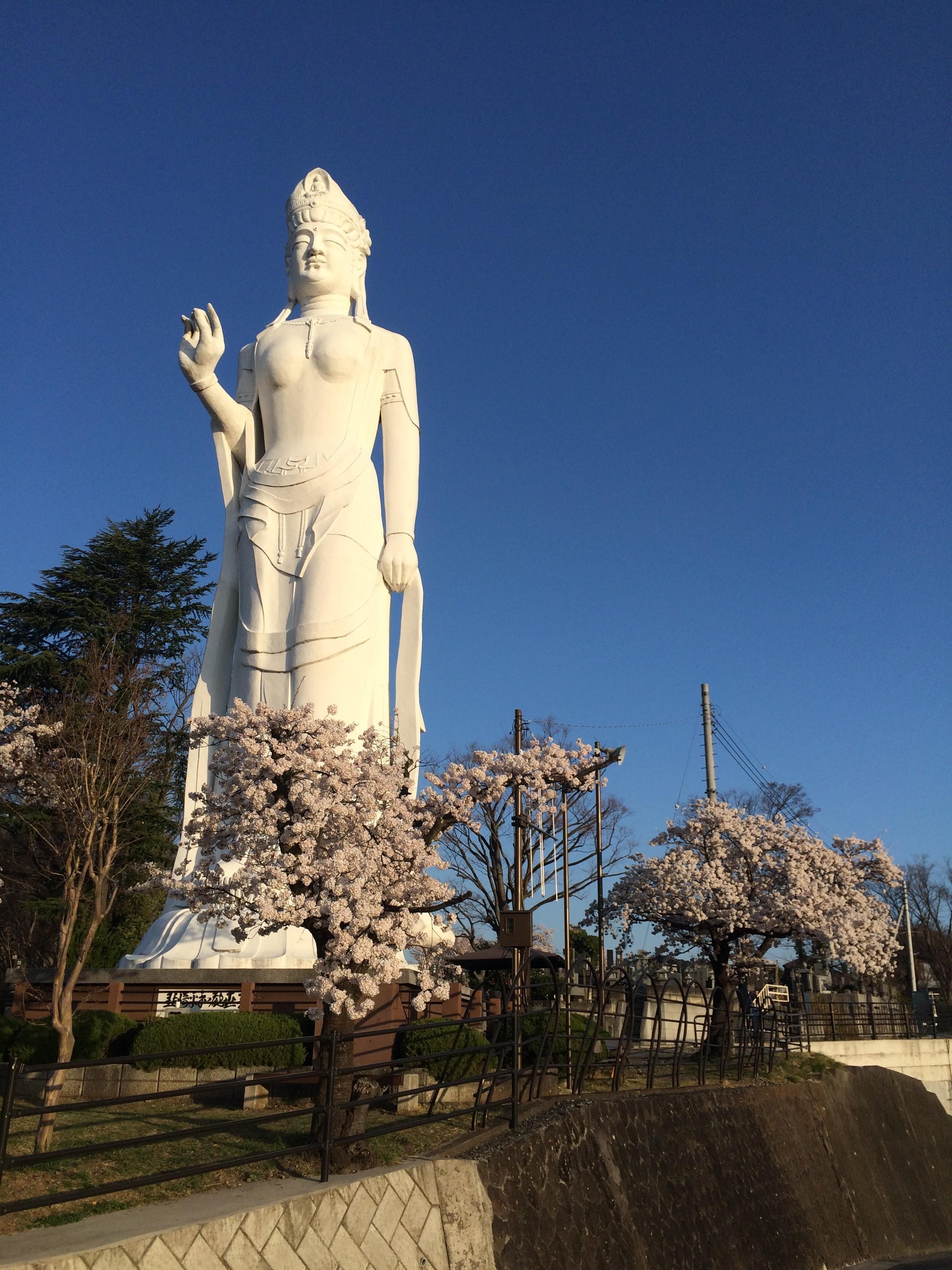 私的な桜前線報告(武蔵国分寺~韮崎~松本~天竜峡)
