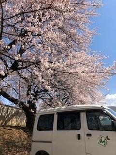 「桜」と「まかせて号」の相性はいかが?