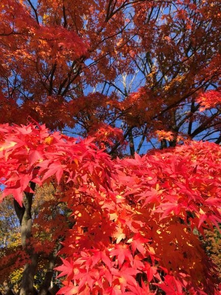 燃ゆる秋、Begins Today合同会社設立おめでとうございます。